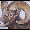#1352 Bighorn Sheep Limited-Edition Giclee (Unframed Canvas On Masonite) (Edition Size: 50)