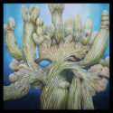 #1346 Crested Saguaro Cactus (24″ X 24″ Print Also Available For $225.00)
