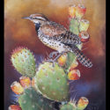 #1438 Cactus Wren on Prickly Pear Cactus