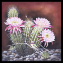 #1475 Hummingbirds w/Hedgehog Cactus