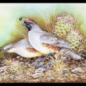 #1440 Two Gambel's Quail w/Cactus (Unframed Canvas On Masonite) (Edition Size: 50)