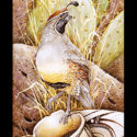 #1370 Gambel's Quail w/Pot & Prickly Pear Cactus (Edition Size: 50)