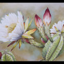 #1516 Night Bloomer w/Blossoms (Unframed Canvas On Masonite) (Edition Size: 50)